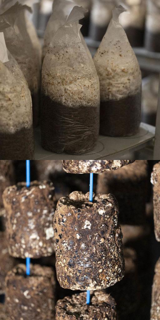 菌床づくり